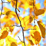初秋、仲秋、晩秋の違いとは?時期や時候の挨拶について解説