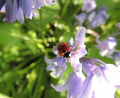 ladybird-449333_640