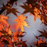秋をテーマにした有名な5つの俳句とその意味を解説!