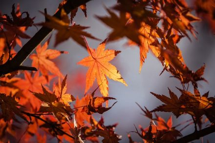 autumn-leave-1415541_640