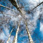 冬をテーマにした有名な5つの俳句とその意味を厳選して紹介